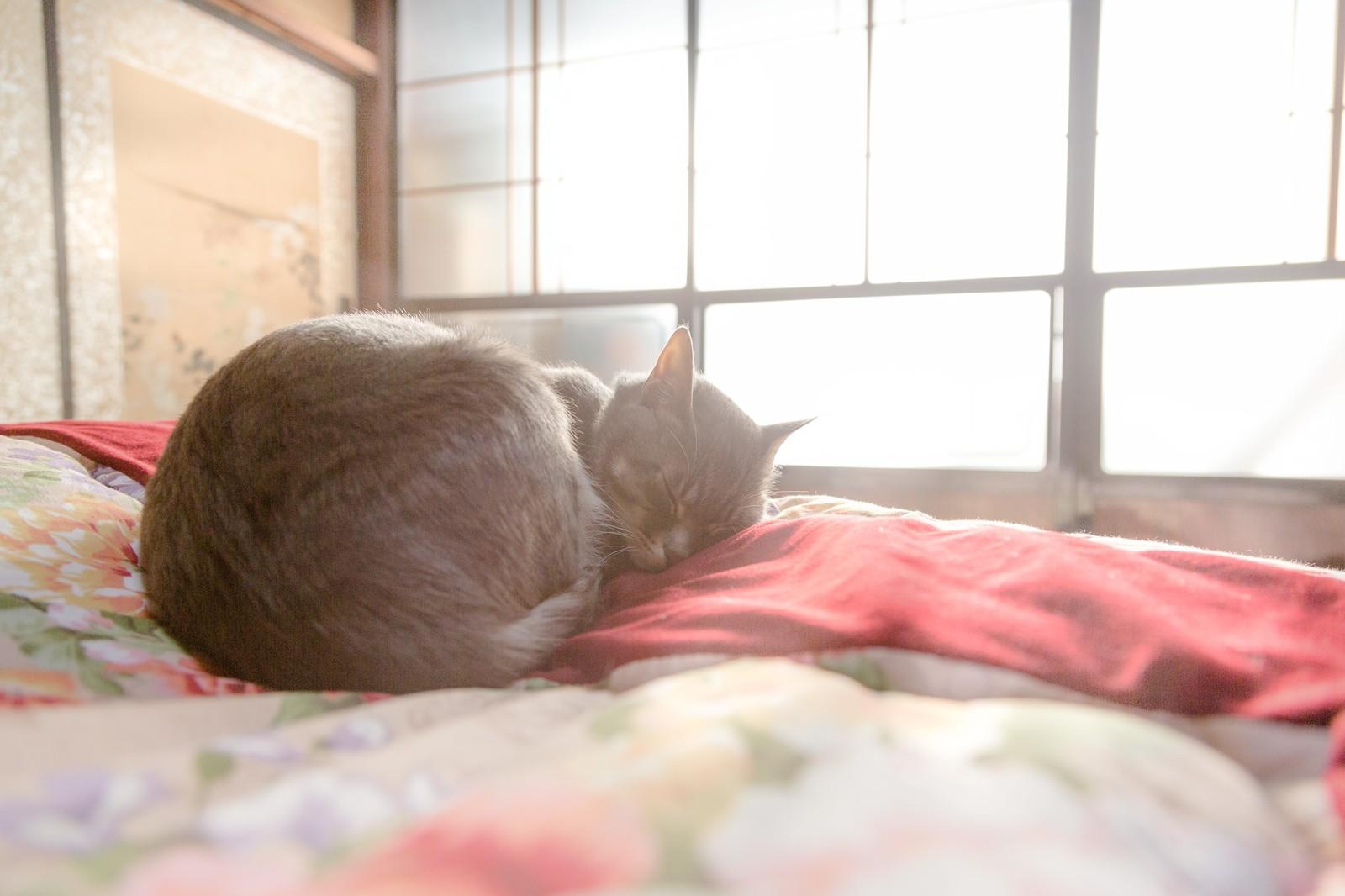 お布団で寝坊する猫ちゃん